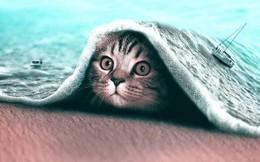 Xem cách công cụ Photoshop thần thánh biến hình ảnh loài vật trở nên siêu thực đến khó tin
