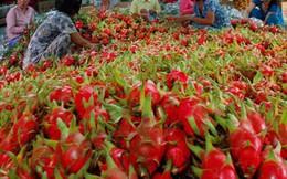 Xuất khẩu rau quả Việt phụ thuộc vào Trung Quốc ngày càng lớn
