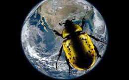 Chuyện gì sẽ xảy ra nếu côn trùng biến mất hoàn toàn khỏi mặt đất?