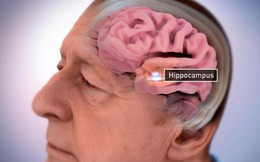 Người già đến 70 tuổi vẫn có thể tạo ra hàng trăm nơ-ron thần kinh mỗi ngày