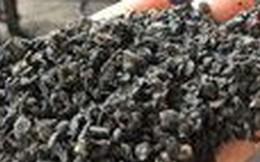 Bộ Nông nghiệp lập tổ công tác, làm rõ vụ cà phê nhuộm pin