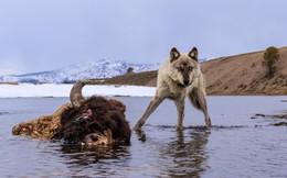 Dụ sói vào đàn hươu: Bí quyết giúp nhân viên luôn có động lực phát triển mà ít sếp biết được