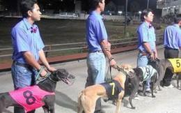 Đà Nẵng sẽ có trường đua ngựa, đua chó rộng hơn 500.000m2 tại Cẩm Lệ