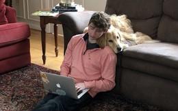 Nhờ nghề đánh giá chó online, anh chàng này vẫn kiếm được cả trăm nghìn USD/năm dù không học Đại học