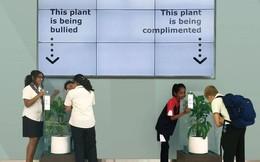 IKEA kêu gọi học sinh mắng chửi chậu cây cả tháng trời, kết quả sẽ khiến bạn tròn mắt