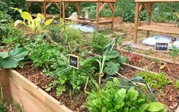 Paris lên kế hoạch dành 1/3 không gian xanh mới cho nông nghiệp đô thị