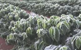 Thị trường cà phê thận trọng trước dự báo thời tiết bất lợi từ Brazil