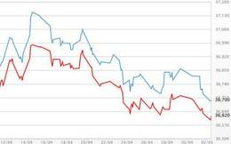 Vàng miếng rẻ nhất gần 1 tháng, USD tự do tăng mạnh