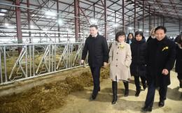 Xây xong trang trại và nhà máy sữa lớn nhất châu Á ở Nghệ An, tập đoàn TH đến Nga bắt tay quỹ RDIF đầu tư hơn 630 triệu USD phát triển công nghiệp sữa