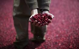 Ngành nông nghiệp có lịch sử vài trăm năm này của Mỹ đang có nguy cơ sụp đổ vì chiến tranh thương mại