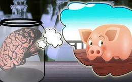 Giữ não bộ lợn sống trong khi cơ thể đã bị đem giết thịt: Thí nghiệm khiến chúng ta phải định nghĩa lại cái chết