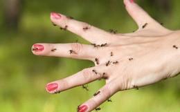 Cảm giác như cả người lúc nhúc côn trùng: căn bệnh lạ kỳ đang khiến gần trăm nghìn người phải khổ sở mỗi ngày