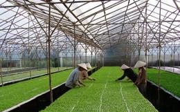 Thứ trưởng Bộ NN&PTNT: Vị thế nông nghiệp Việt Nam đã thay đổi, nên nhìn tổng quan chứ không nên đánh giá một chiều