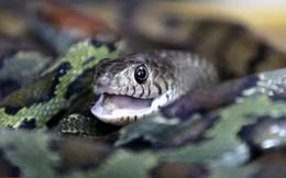 Ngôi làng rắn nhiều gấp 1.000 lần số dân, đem về thu nhập hàng nghìn USD mỗi tháng