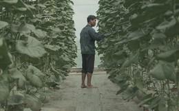 Trồng rau phải nhập phân bón từ nước ngoài, thịt mình ăn toàn... đô la, nông nghiệp công nghệ cao Việt Nam đang ở đâu?