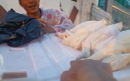 """""""Giải mã"""" gà không đầu siêu rẻ tại Việt Nam"""