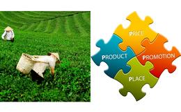 Từ chuyện bán chè đặc sản sang Mỹ đến việc áp dụng nguyên lý 4P trong marketing vào xuất khẩu