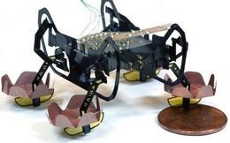 Harvard phát triển thành công robot đổ bộ siêu nhỏ có thể bơi lội, đi bộ dưới nước và lên bờ thành thạo