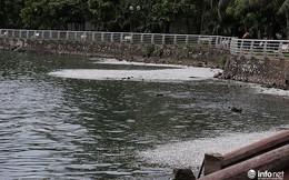 Thời tiết thay đổi, cá chết nổi trắng nhiều góc của Hồ Tây