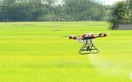 """Video: """"Đã mắt"""" xem máy bay không người lái phun thuốc trừ sâu tại Hà Tĩnh"""