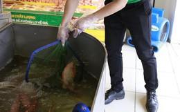 Sau khi đổi chiến lược từ ngõ ra phố, Bách Hóa Xanh bước đầu bứt phá, tiếp tục tạo sự khác biệt bằng cách bán cá sống lội bể