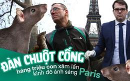 """Kinh hoàng """"cơn bão"""" chuột cống kéo đến khắp kinh đô ánh sáng Paris"""