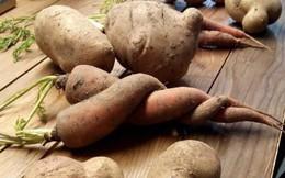 Bạn biết không: Dân Châu Âu thẳng tay vứt bỏ 50 triệu tấn rau củ quả mỗi năm chỉ vì trông chúng xấu mã