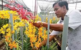 TP.HCM muốn đẩy mạnh kinh doanh hoa lan cắt cành