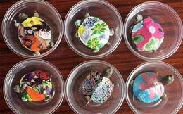 Sốt mua bán rùa sống siêu nhỏ siêu lạ làm đồ chơi: Ngã ngửa vì điều này
