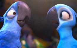 """Đau lòng: Giống vẹt xanh đuôi dài làm nguồn cảm hứng cho bộ phim """"Rio"""" đã chính thức bị tuyệt chủng ngoài thiên nhiên"""