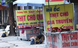 Luật hóa cấm ăn thịt chó có khả thi?