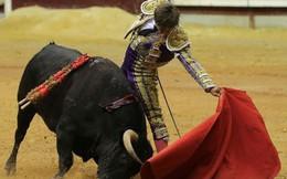 Gia nhập thị trường chưa lâu, Wakeup 247 của Vinacafe đã đánh bại Red Bull Việt Nam về doanh số