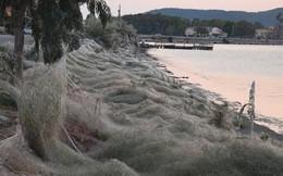 Bờ biển Hy Lạp bị mạng nhện khổng lồ bao phủ, dân mạng bấn loạn đòi đốt sạch trước khi lũ nhện sinh sôi nảy nở