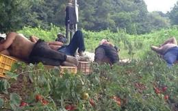 Chùm ảnh: Cư dân mạng Việt tại Nhật chia sẻ những giấc ngủ vội vàng giữa ca làm việc