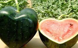 Vì sao một số loại trái cây Nhật Bản có mức giá siêu đắt?