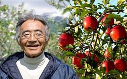 Quả táo thần kỳ của Kimura: Lão nông dân 20 năm trồng táo, người đời quay lưng và thành quả lừng danh thế giới