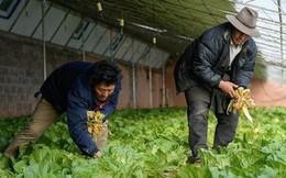 Chỉ bán rau, start-up Trung Quốc được định giá 2,8 tỷ USD