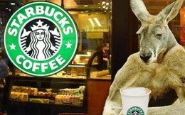 Câu chuyện của Starbucks ở Úc: Bành trướng quá nhanh để rồi bật bãi không kèn không trống