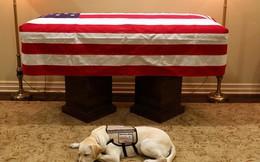 Chú chó nghiệp vụ túc trực bên quan tài cựu Tổng thống Bush (cha) và câu chuyện cảm động phía sau