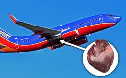 Mỹ: Ai đó đã để quên 1 quả tim người trên chuyến bay của Southwest Airlines