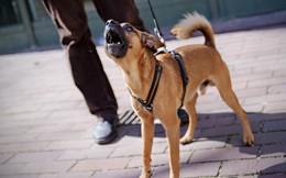 Khoa học chứng minh: Loài chó có thể dễ dàng nhận biết ai là kẻ xấu, người tốt
