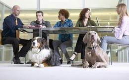 Nghiên cứu khoa học: Nuôi chó sẽ tăng khả năng thành công của doanh nghiệp