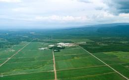 Đường organic – niềm hy vọng giúp TTC Sugar có thể đấu lại với người Thái?