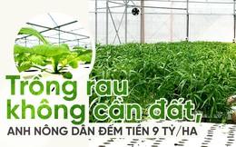 Trồng rau không cần đất,  anh nông dân đếm tiền 9 tỷ/ha