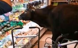 Băng đảng bốn con bò hung hăng cướp sạch rau củ trong siêu thị Hong Kong ngay giữa thanh thiên bạch nhật