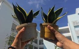 Green of Life - thông điệp từ dự án khởi nghiệp học đường: Trồng rừng không hẳn là giải pháp duy nhất, vẫn có thể tạo ra môi trường trong lành ngay trong lòng đô thị bằng những giải pháp đơn giản