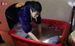 Thấy con cá ở chợ cứ 'cười' với mình, ông chú thích quá mua về nuôi mới phát hiện ra nó là động vật quý hiếm trong Sách Đỏ