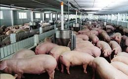 Thịt lợn hạ giá rồi, quyết định giảm 1.000 đồng/kg