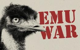 Chiến tranh Emu: thảm bại của quân đội Úc khi cố gắng đối đầu với những con chim vô cùng kỳ lạ