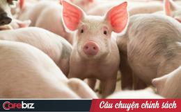 Thịt lợn tiêm kháng sinh Trung Quốc và những hệ luỵ khiến thế giới lo sợ